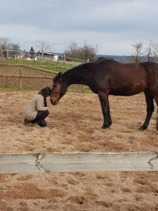 comportementaliste-equin-parole-animale