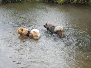 rencontre-chiens-primitifs