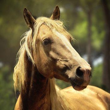cheval-parole-animale